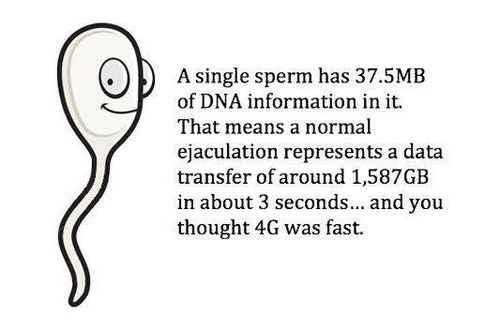 Facts of sperm
