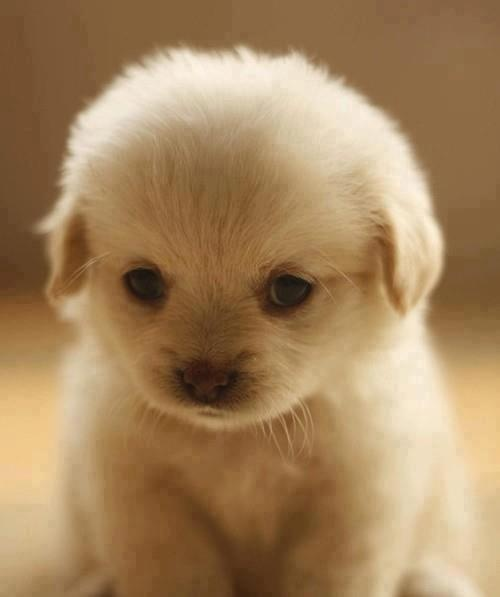 Cute Puppy Photo