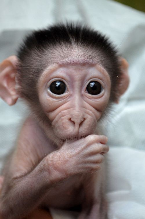 baby monkey cute animals