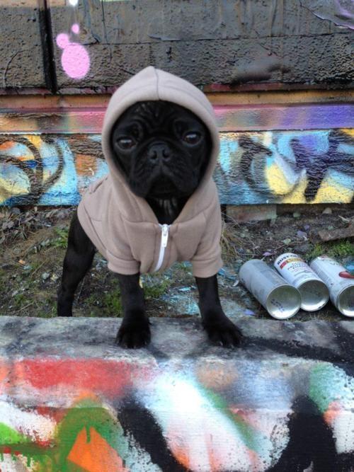 pug life puppies hoodies cute animals