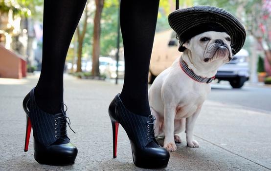 fashion bulldog