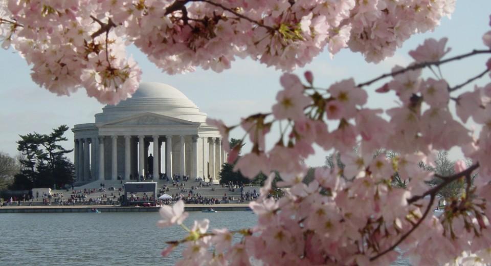 cherry blossom festival nyc