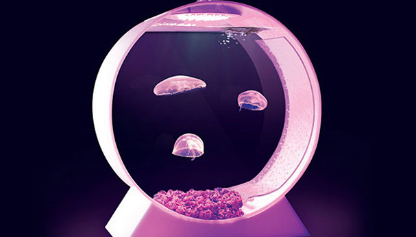 pet jellyfish tank