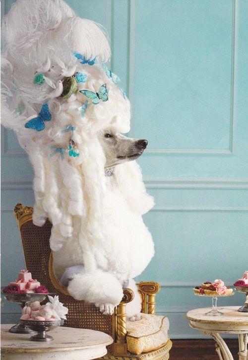 Marie Antoinette dog