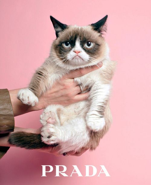 grumpy cat wears prada