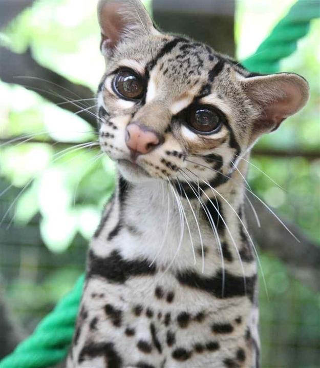 Long Cat Jungle