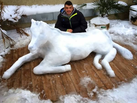 snow animals