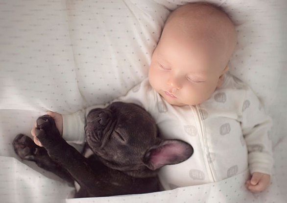 baby bulldog best friends