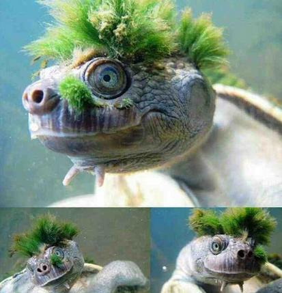 cute turtles