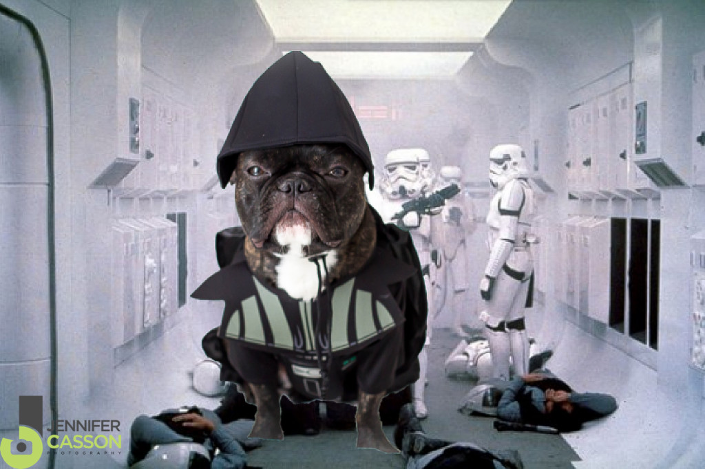 Darth-Vader-Pierre-the-French-bulldog-Star-Wars-Jennifer-Casson-Tripucka-Photography