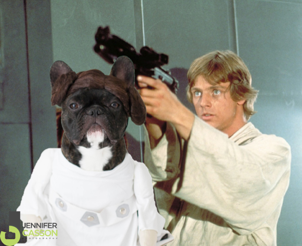 Princess-Leia-Pierre-the-French-bulldog-Jennifer-Casson-Tripucka-Photography