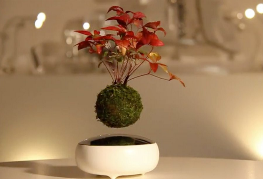 floating bonsai trees