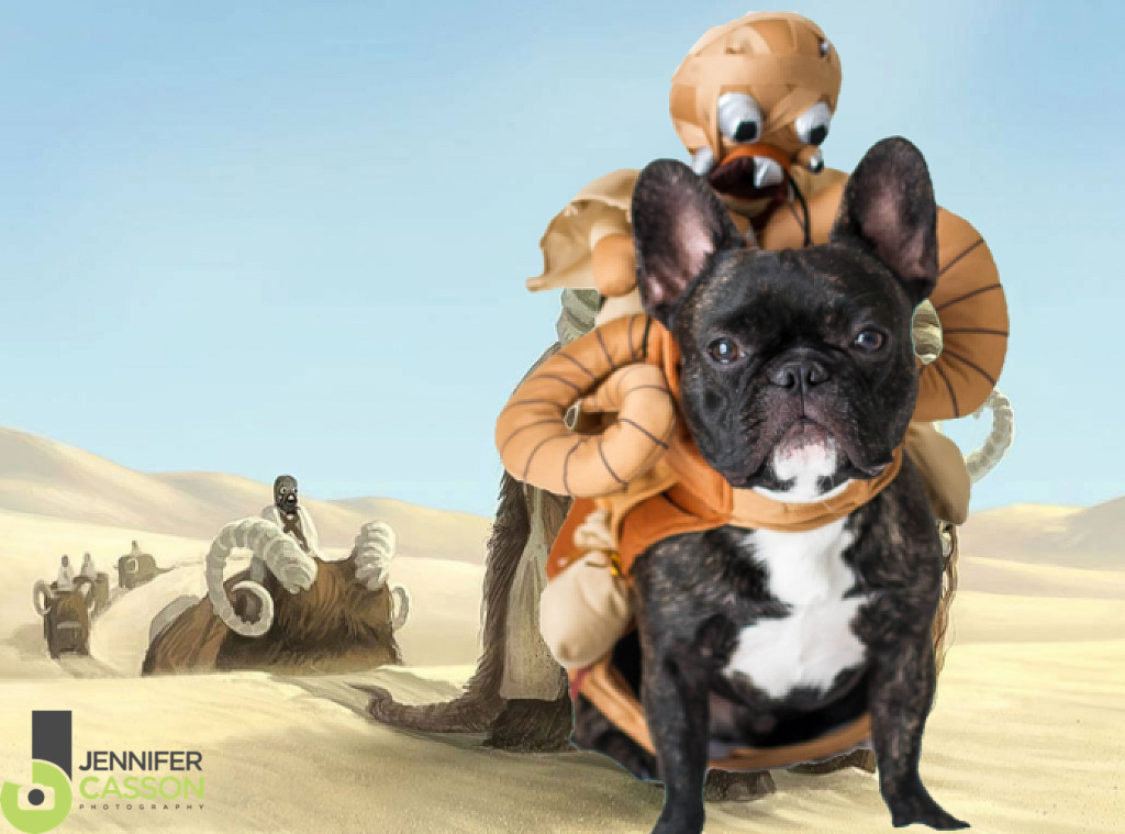 star wars french bulldog