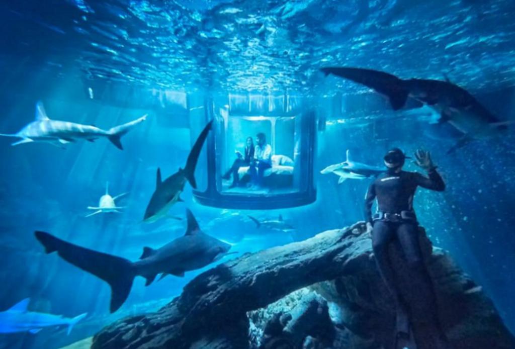 airbnb shark tank