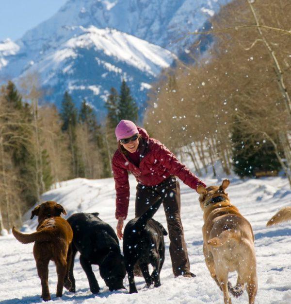 Dog Friendly Hotels In Aspen Colorado