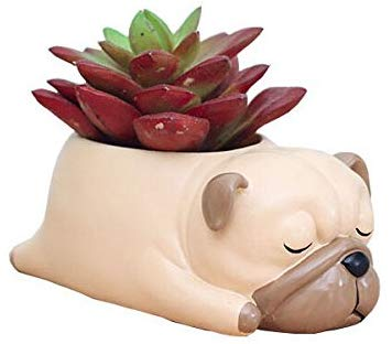 pug gifts, succulent pug planter gift