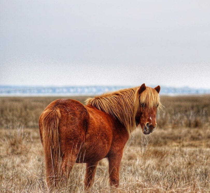 wild stallions, maryland