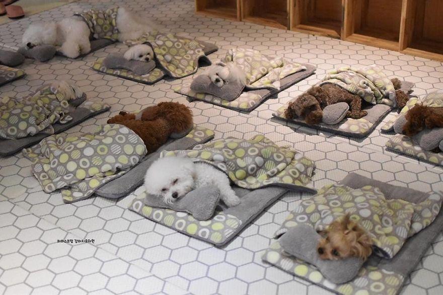 puppy naps