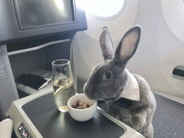 travel bunny