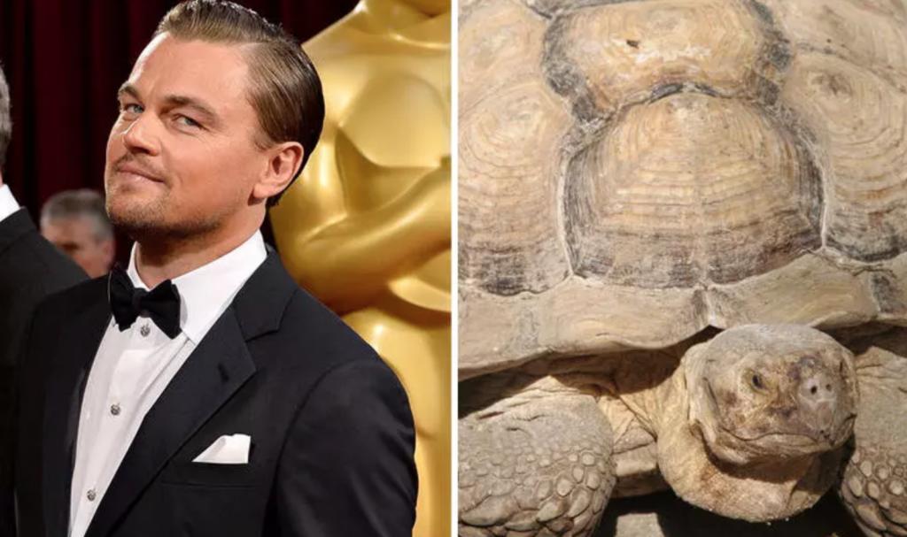 Leo DiCaprio pet tortoise, weird celebrity pets