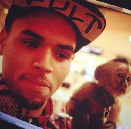 Chris Brown pet capuchin monkey, weird celebrity pets