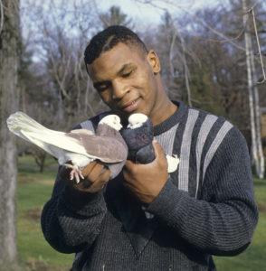 mike tyson pet pigeons, weird celebrity pets