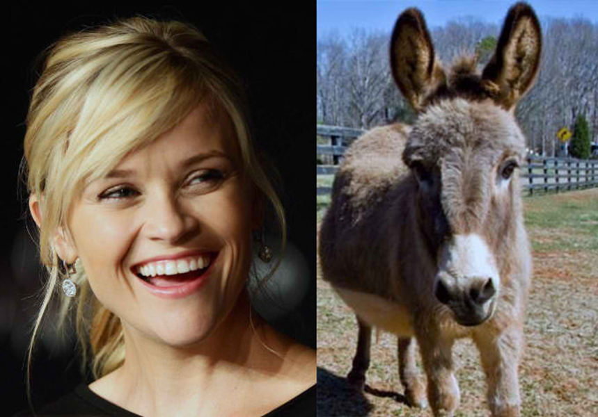 reese witherspoon pet donkeys, weird celebrity pets