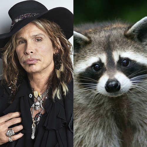steven tyler pet raccoon, weird celebrity pets
